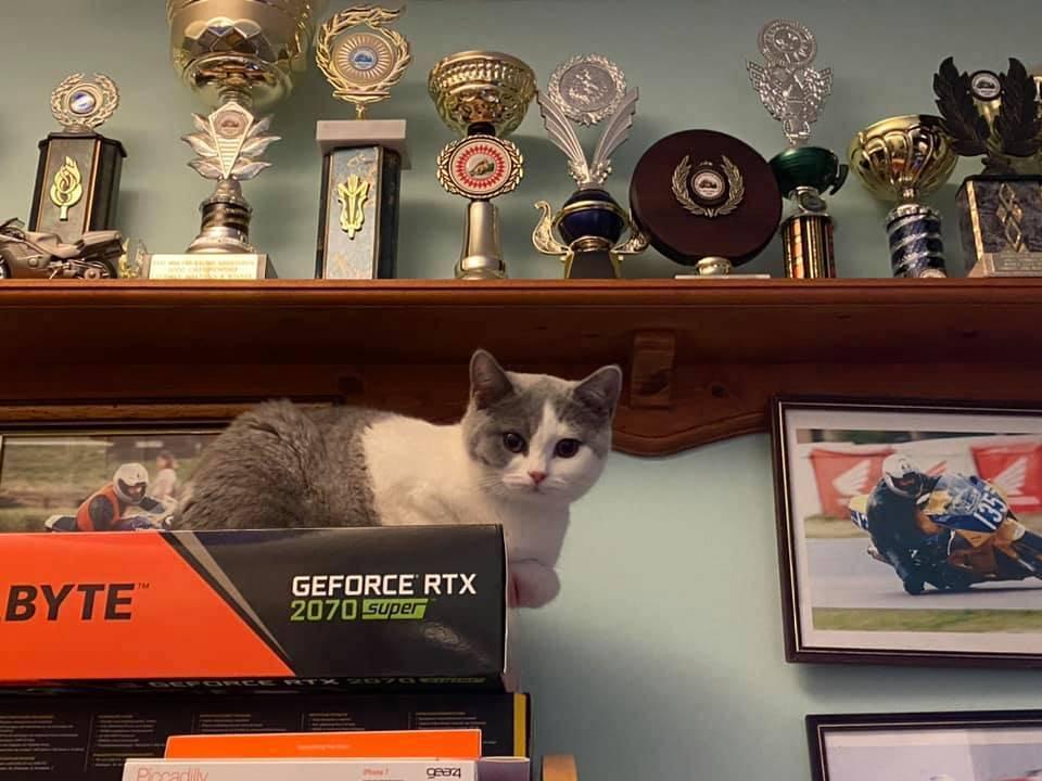 Kitty spy 1