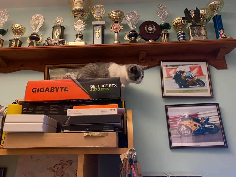 Kitty spy 2